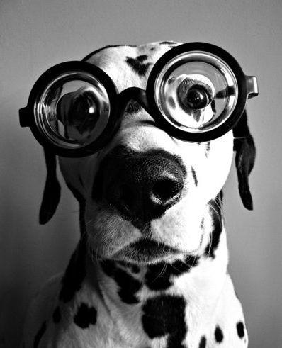 chien a lunettes