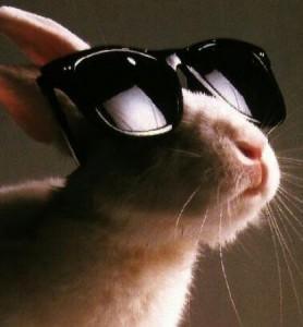 Lapin portant des lunettes de soleil