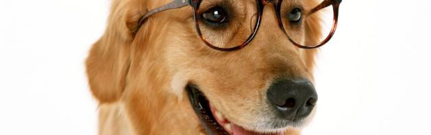 chien a lunettes 2
